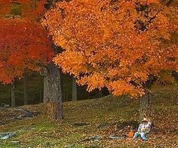 Research suggests autumn is ending later in the northern hemisphere | Sustain Our Earth | Scoop.it