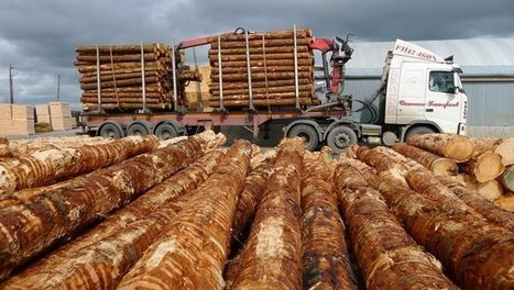 Sharp rise in timber prices in Ireland and UK | Timberland Investment | Scoop.it