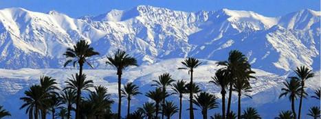 Glisse et palmiers à Marrakech - République Seine-et-Marne   Marrakech Maroc   Scoop.it