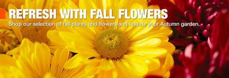 Plants, Bulbs, Trees, Shrubs, Seeds & Perennials | Butterfly Garden PBL | Scoop.it