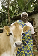 New Agriculturist: Developments - Fighting poverty with heifers in Rwanda | Africa: It's NOT a Country! | Scoop.it