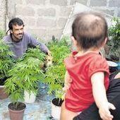 Uruguay : une révolution en herbe - Le Monde | Kolibrius Issue#4 LA REVOLUTION ! | Scoop.it