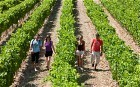 French wines: Loire Valley - Telegraph   Travel in france   Scoop.it