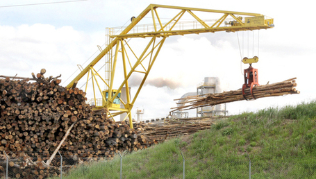 Local timber helps meet world's needs | Timberland Investment | Scoop.it