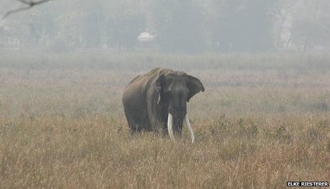 Dead Indian elephant Joyraj mourned | Oven Fresh | Scoop.it