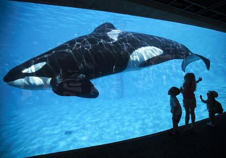 Todos sabemos que SeaWorld se acabó. Aquí tienes el porqué | Paz y bienestar interior para un Mundo Mejor | Scoop.it