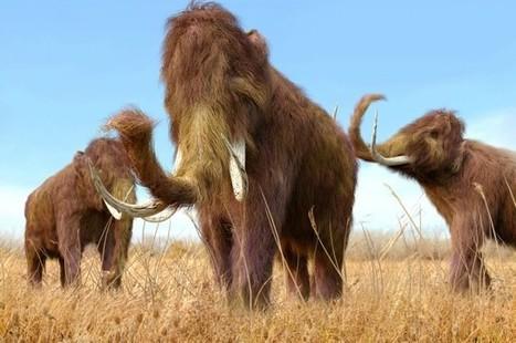 Warming Lethal For Extinct Megafauna | Aux origines | Scoop.it
