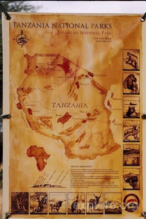 Scenes Of African Safaris | Seeking Greener | My Funny Africa.. Bushwhacker anecdotes | Scoop.it