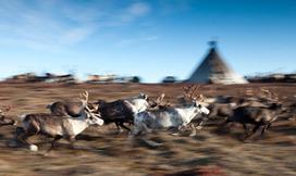 La Siberia - il Popolo dei Nenets | Foto dal Mondo | Scoop.it