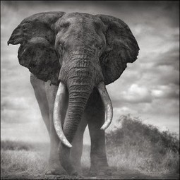 CITES underway: World must protect African Wildlife Heritage | Wildlife Trafficking: Who Does it? Allows it? | Scoop.it