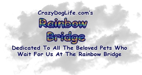 CrazyDogLife Rainbow Bridge Video   Crazy Dog Life   Pet Bereavement   Scoop.it