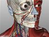 BioDigital Human - Kennisnet. Leren vernieuwen | MBO'ers en de zorgsector | Scoop.it