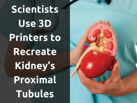 Scientists Use 3D Printers to Recreate Kidney's Proximal Tubules | IT Support and Hardware for Clinics | Scoop.it