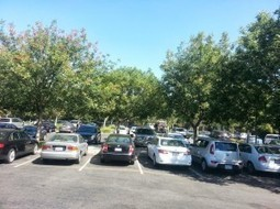 Tree Davis Research Tackles Challenges to Shaded Parking Lots | Tree Preservation Planning | Scoop.it