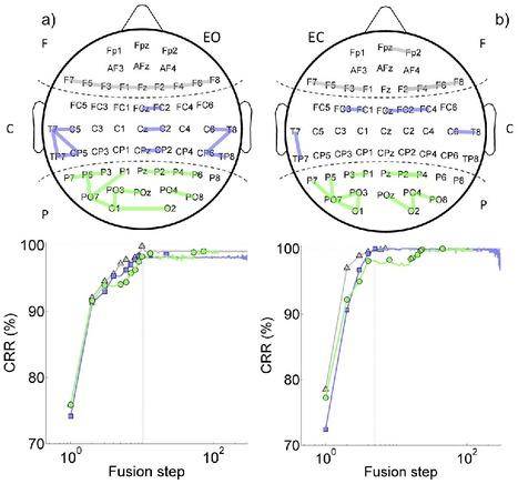 Human brain distinctiveness based on EEG spectral coherence connectivity | Highlights | Scoop.it