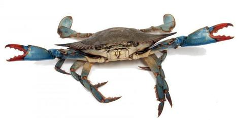 What is the Crab Mentality? | Africa Let's Change Our Mentality | Scoop.it