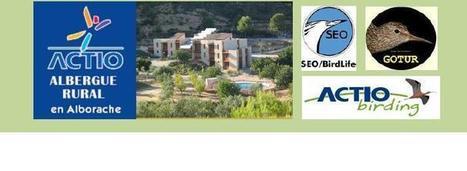 Día de las Aves 2013 - Actio Activitats | Turismo de Naturaleza, en familia | Scoop.it