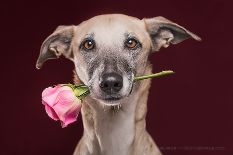 Happy mother's day by Elke Vogelsang | I didn't know it was impossible.. and I did it :-) - No sabia que era imposible.. y lo hice :-) | Scoop.it