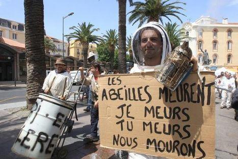 Solidarité avec les apiculteurs pyrénéens  Appel aux dons !   Abeilles, intoxications et informations   Scoop.it