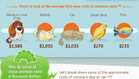 How expensive is owning a pet? [Infographic] | Pet News | Scoop.it