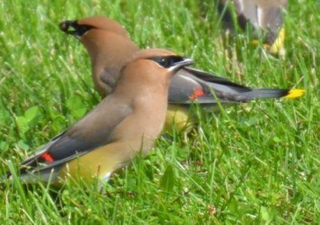 Does backyard bird feeding affect migration? - Reno Gazette Journal | Art-nstuff | Scoop.it