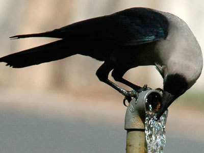 Angry birds rock! Crows pelt MPs cars with pebbles | A Sense of the Ridiculous | Scoop.it