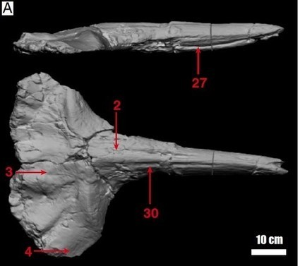 La baleine qui monte, qui monte, qui monte…   C@fé des Sciences   Scoop.it