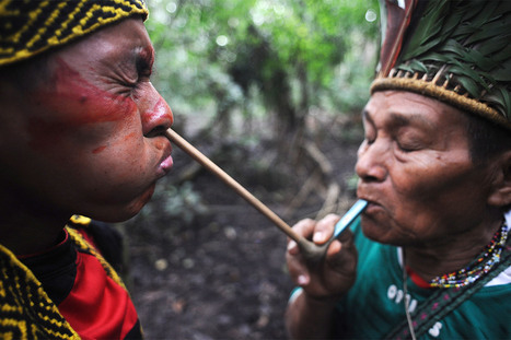 Flu-Infected Isolated Amazon Tribe Can be Wiped Out - International Business Times UK | Rainforest EXPLORER:  News & Notes | Scoop.it