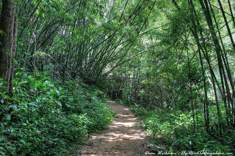 Bamboo Forest Trail in Northern Thailand | Travel Photo | Travel Photography | Scoop.it