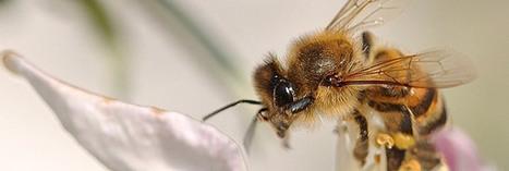Planetoscope - Statistiques : Disparition d'espèces dans le monde | protection de  la biodiversité | Scoop.it