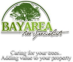 Little Off the Top: Palo Alto Tree Care Calls for Regular Pruning   Bay Area Tree Specialists   Scoop.it