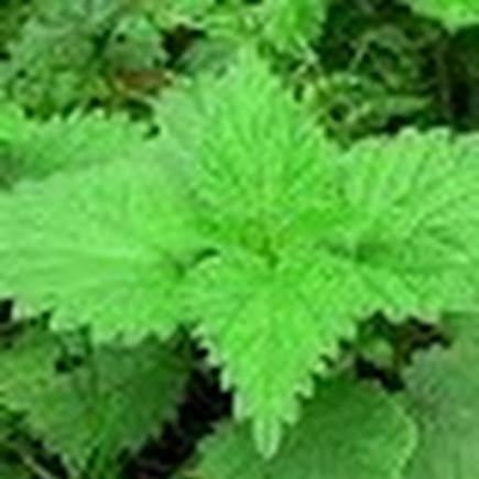 Augmenter les fesses naturellement | remede traditionnelle par les plantes | Scoop.it