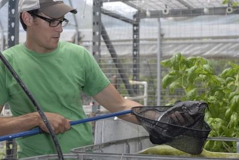 California Aquaculture Companies Explore Sustainable Fish Farming - KQED (blog)   Aquaculture Directory   Scoop.it