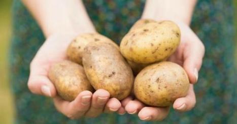 Comment empêcher vos pommes de terre de germer ? | CuisineAZ Promos | dietconseil actualite dietetique nutrition évolution | Scoop.it