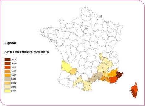 FRANCE. Chikungunya : pourquoi une épidémie pourrait survenir dès cet été | Toxique, soyons vigilant ! | Scoop.it