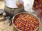 Karité au Burkina Faso : des revenus en hausse grâce à des ... - CIRAD | Batucada ! | Scoop.it