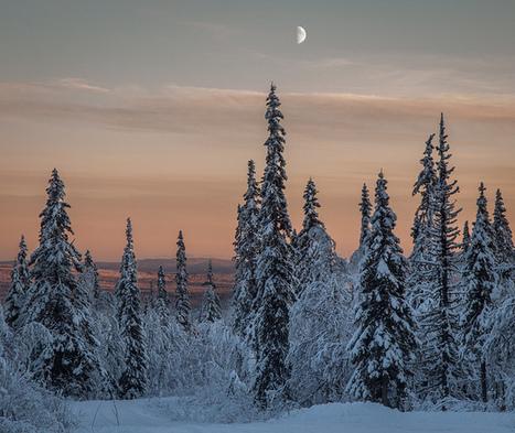 Snowy Scenery   Photography   Scoop.it
