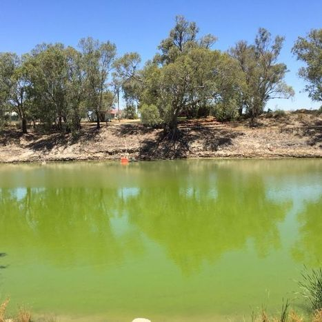 Poor quality and short supply: the Darling River fails growers | Curtin Global Challenges Teaching Resources | Scoop.it