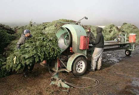 After long delay, Christmas tree checkoff board named | Christmas Trees and More | Scoop.it