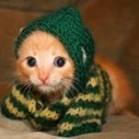 Orange Kitten is too Cute in her Knitted Sweater | FroliCat Blog ... | The Funniest Cats In The World! | Scoop.it