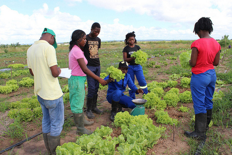Brazilian Innovation for Under-financed Mozambican Agriculture | Questions de développement ... | Scoop.it