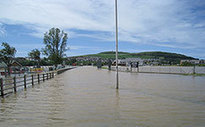Floods caused lead poisoning in UK cattle | Sustain Our Earth | Scoop.it
