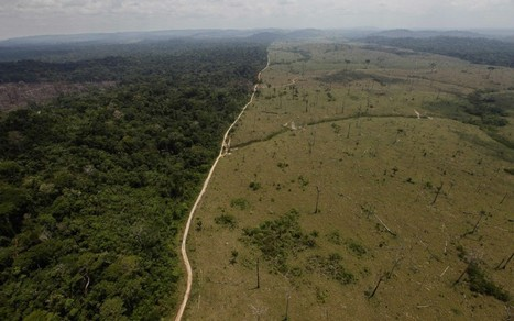 Humans Are Set To Wipe An India-Sized Chunk Of Forest Off The Earth By 2050 | GarryRogers NatCon News | Scoop.it