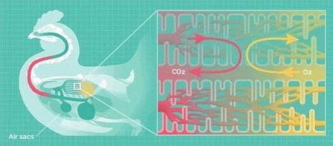 Fascinating animations show how different animals breathe | Distant education | Scoop.it