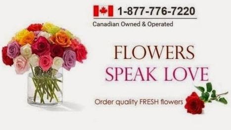 Panda Flowers - Calgary Florist - Bio - Google+ | Services & Products News | Scoop.it