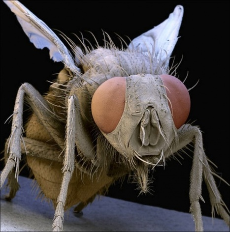 Microscopic insects by Steve Gschmeissner | New Design Blog | Image Conscious | Scoop.it