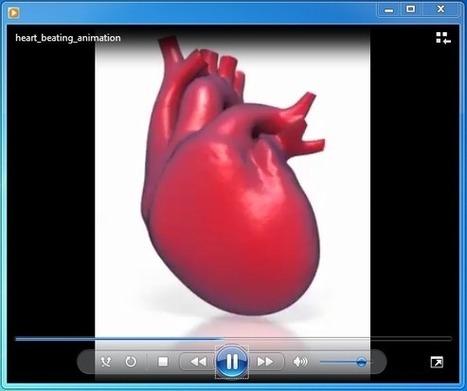 Vital Organ Heart PowerPoint Template | PowerPoint Presentation | rubenrhodesian | Scoop.it