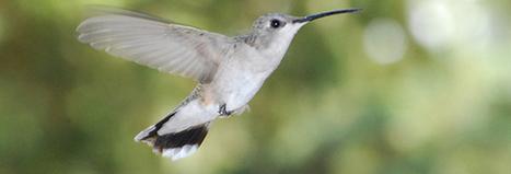 Google's New Hummingbird Algorithm & Keyword Locking | Web Design & SEO | Scoop.it