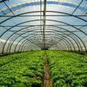 @l_AdCF Les collectivités Françaises, moteurs de l'alimentation durable au sein des territoires ? | Projet de DA Julia | Scoop.it