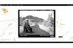 #Sheffield Doc/Fest Innovation Winner Reviewed: Bear 71 – an unconventional documentary | DocGeeks | Tracking Transmedia | Scoop.it